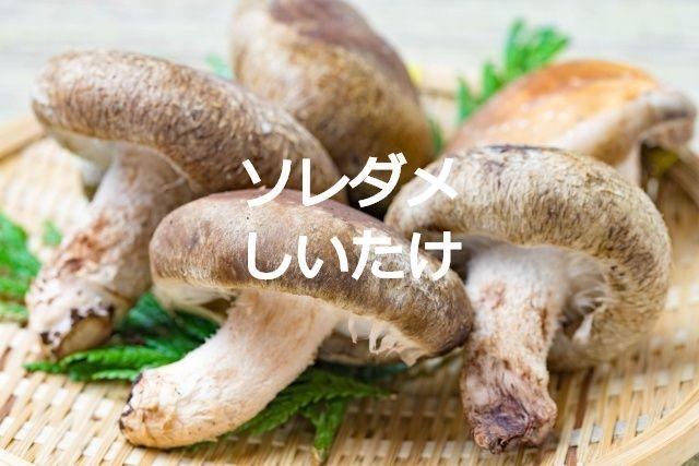 ソレダメしいたけ(椎茸・シイタケ)